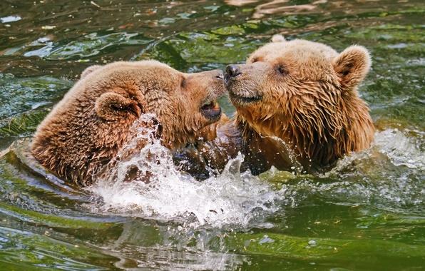 Картинка вода, брызги, медведи