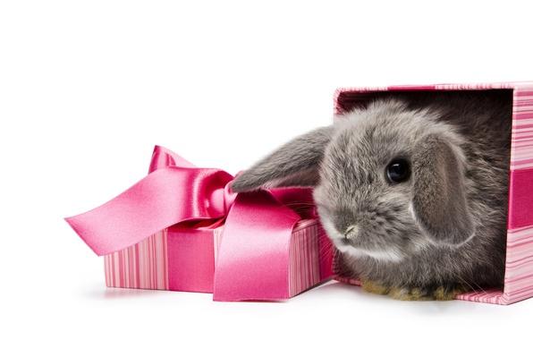 Картинка белый, фон, коробка, подарок, кролик