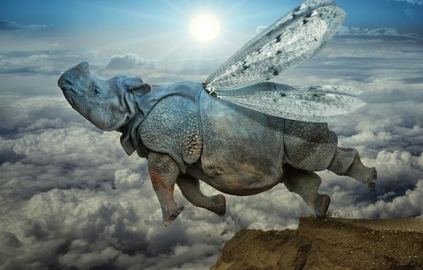 Картинка облака, прыжок, крылья, носорог
