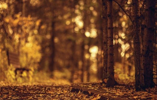 Картинка осень, листья, деревья, скамейка, природа, фон, дерево, widescreen, обои, размытие, wallpaper, листочки, широкоформатные, background, autumn, …