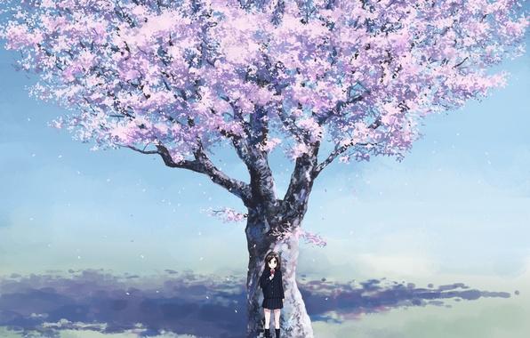 Картинка вишня, весна, аниме, сакура, девочка