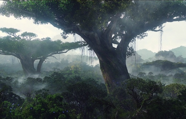 Картинка лес, деревья, пейзаж, джунгли