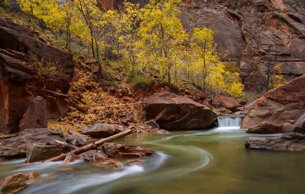 Картинка деревья, река, ручей, камни, скалы, каньон, Юта, США, Zion National Park