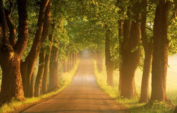 Картинка дорога, лето, деревья, туман, восход, утро, Швеция