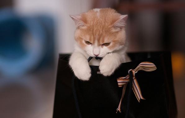Картинка кошка, игра, пакет, лента, сумка, бантик, Ben Torode, Hannah