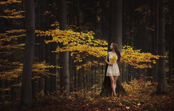 Картинка осень, лес, девушка