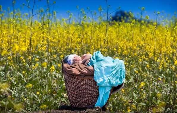 Картинка лето, младенец, рапс