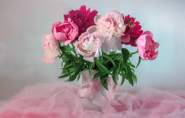 Пионы цветы живопись