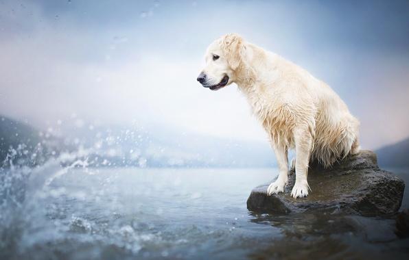 Картинка взгляд, вода, друг, собака
