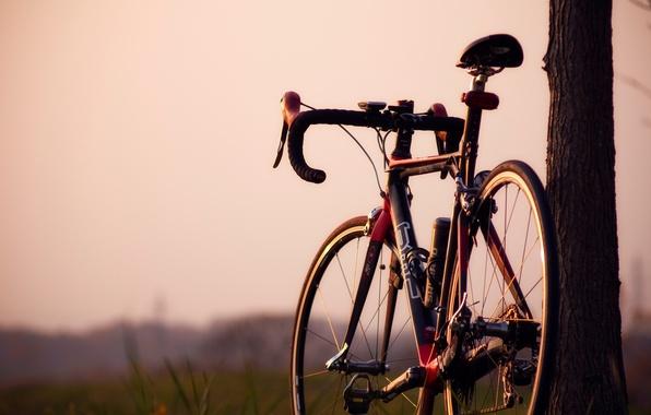 Картинка зелень, природа, велосипед, фон, дерево, widescreen, обои, настроения, размытие, колесо, руль, колеса, ствол, wallpaper, широкоформатные, ...