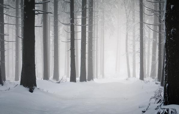 Картинка холод, зима, дорога, снег, деревья, дерево, стволы, дороги, мороз, снегопад, леса, winter wallpapers, просека, зимняя …