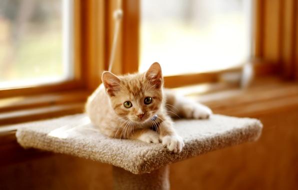 Картинка кот, взгляд, котенок, окно, рыжий, лежит