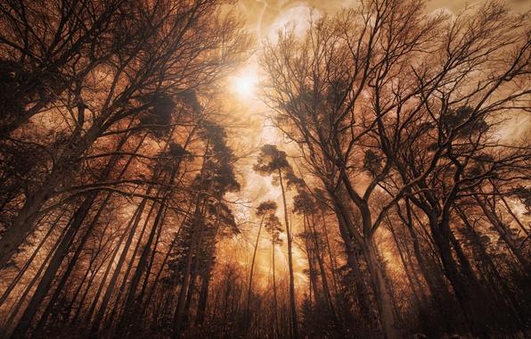 Картинка лес, деревья, освещение