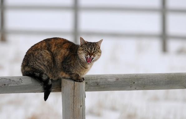Картинка зима, кошка, кот, снег, забор, столб, деревяшки