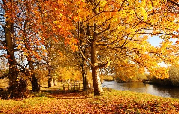 Картинка осень, лес, листья, вода, солнце, свет, деревья, природа, город, река, забор, ограда, желтые, Шотландия, Scotland, …