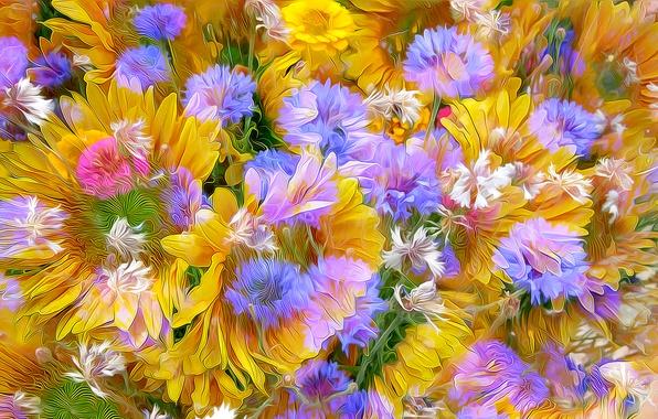 Картинка цветы, природа, лепестки, луг, клумба