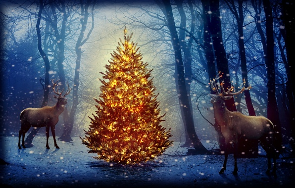 Картинка лес, снег, деревья, новый год, ёлка, олени, гирлянды