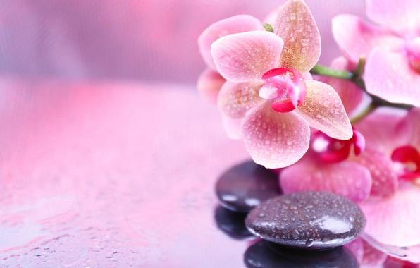 Картинка цветы, капельки, орхидея, flowers, Orchid, droplets, спа камни, Spa stones