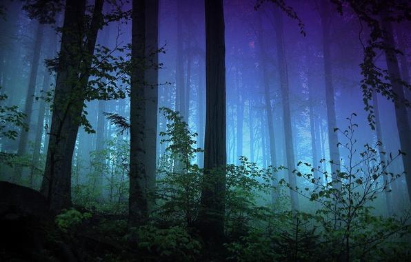 Картинка лес, свет, деревья, ночь, ветки, туман, вечер, кусты