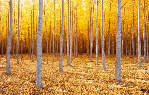 Картинка осень, деревья, природа, США, Октябрь, восточный Орегон