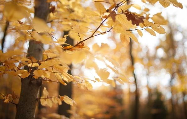 Картинка осень, лес, листья, макро, деревья, желтый, природа, парк