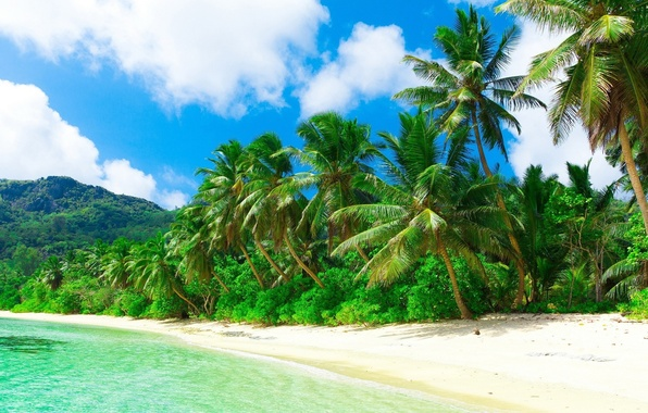 Картинка море, пляж, природа, тропики, пальмы