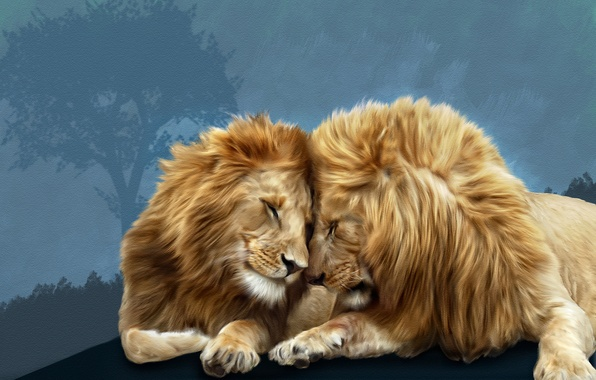 Картинка львы, Photoshop, братская любовь
