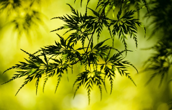 Картинка зелень, листья, веточка, листва, растение