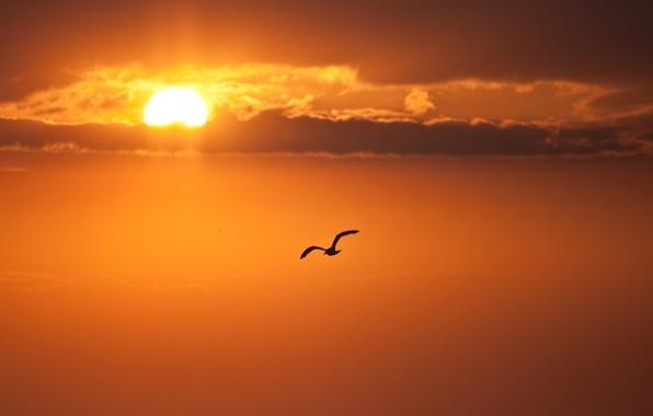 Картинка небо, облака, полет, птица, Солнце