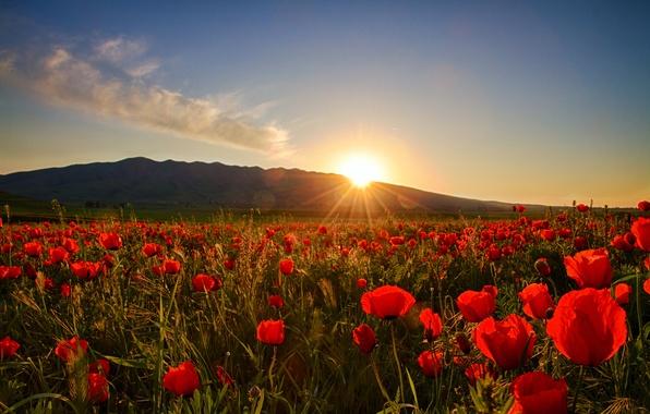 Рассвет фото солнце