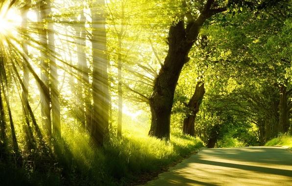 Картинка дорога, лето, трава, солнце, лучи, деревья, туман, парк, восход, утро