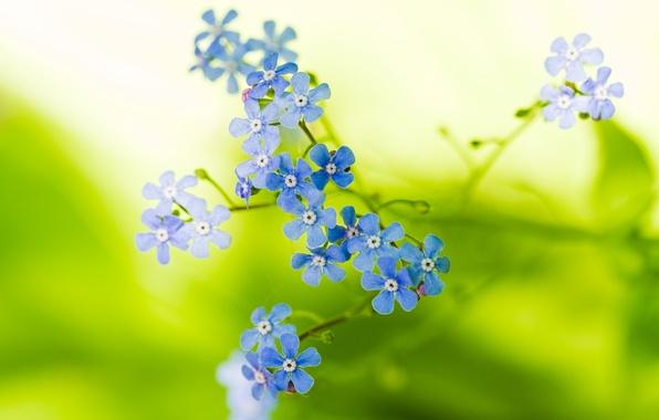 Картинка макро, цветы, природа, растение