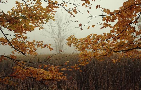 Картинка осень, листья, ветки, туман, дерево