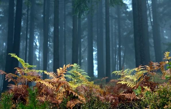 Картинка лес, деревья, пейзаж, природа, папоротник