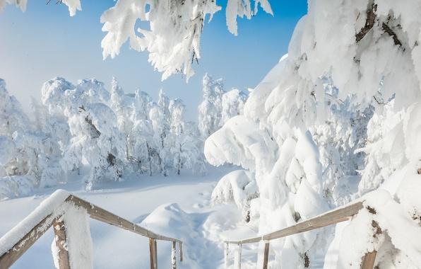 Картинка зима, снег, деревья, сугробы, Россия, Южный Урал