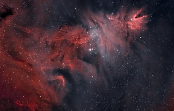 Картинка Рождественская елка, и звездное скопление, туманность Конус, NGC 2264