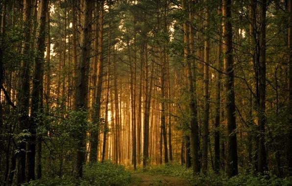 Лес деревья свет обои фото картинки