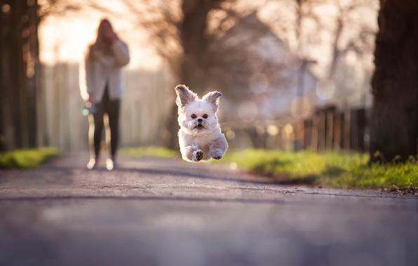 Бег прыжок обои фото картинки