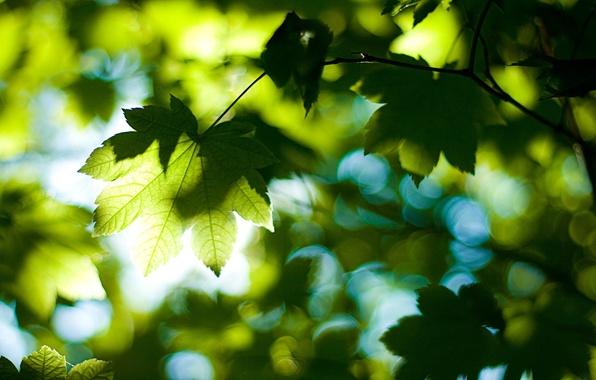 Картинка лес, лето, листья, свет, деревья, природа, листва, день