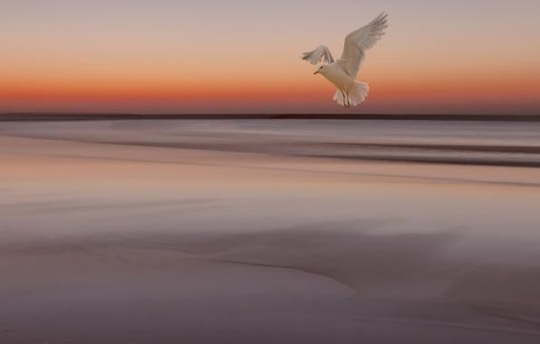 Картинка море, небо, закат, птица, чайка, отлив