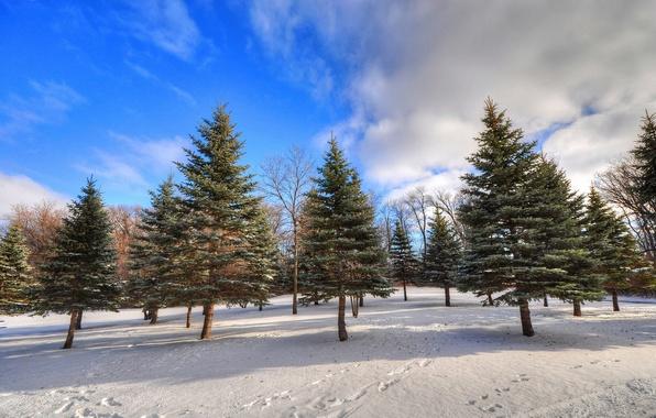 Картинка зима, лес, небо, облака, снег, деревья, следы, ель