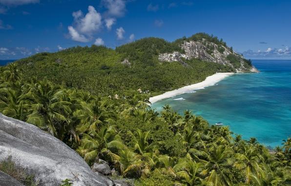 Картинка море, пляж, лето, вода, солнце, природа, камни, пальмы, наслаждение, океан, скалы, отдых, берег, пейзажи, вид, …