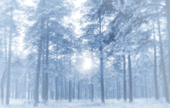 Картинка зима, иней, лес, снег, деревья, сосны, просвет, морозно