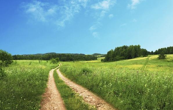 Картинка дорога, поле, небо, трава, облака, деревья, grass, road, sky, trees, field, clouds