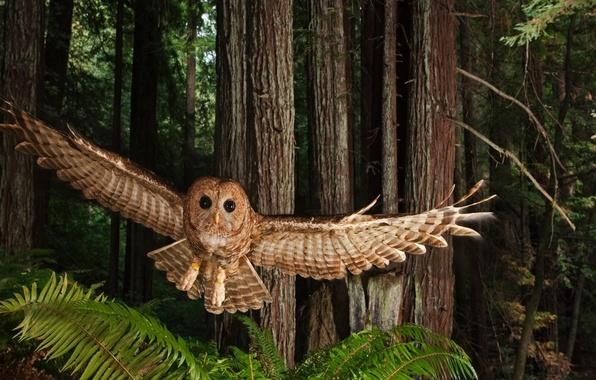Картинка лес, птица, крылья, полёт, взмах