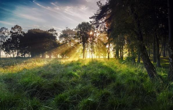 Картинка осень, небо, трава, солнце, лучи, свет, деревья, туман, роса, дерево, Англия, октябрь, утро, York, Северный …
