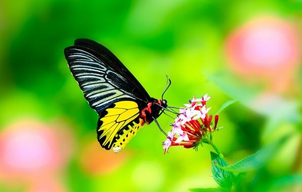 Картинка цветок, листья, бабочка, Макро, крылья