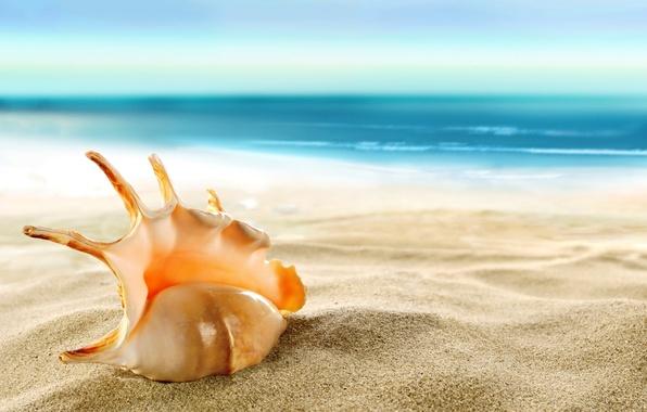 Картинка песок, море, пляж, ракушка, beach, sea, sand, shore, seashell