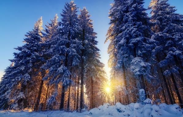 Картинка зима, лес, лучи, свет, снег, деревья, природа, ёлки, солнца