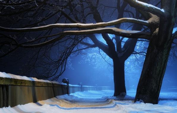 Картинка зима, свет, снег, деревья, ночь, природа, парк, стена, алейка